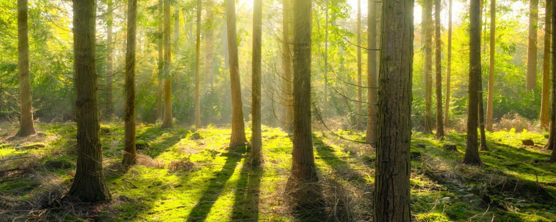 Perchè scegliere il legno? Una scelta ecosostenibile